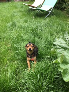 Avoid back strains when gardening - A picture of a dog in long grass
