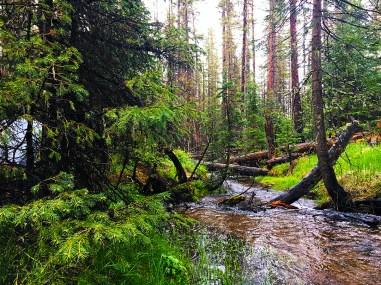 the stream running through camp