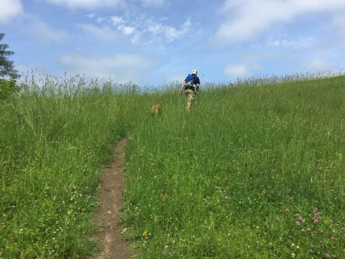 Dog hiking trips