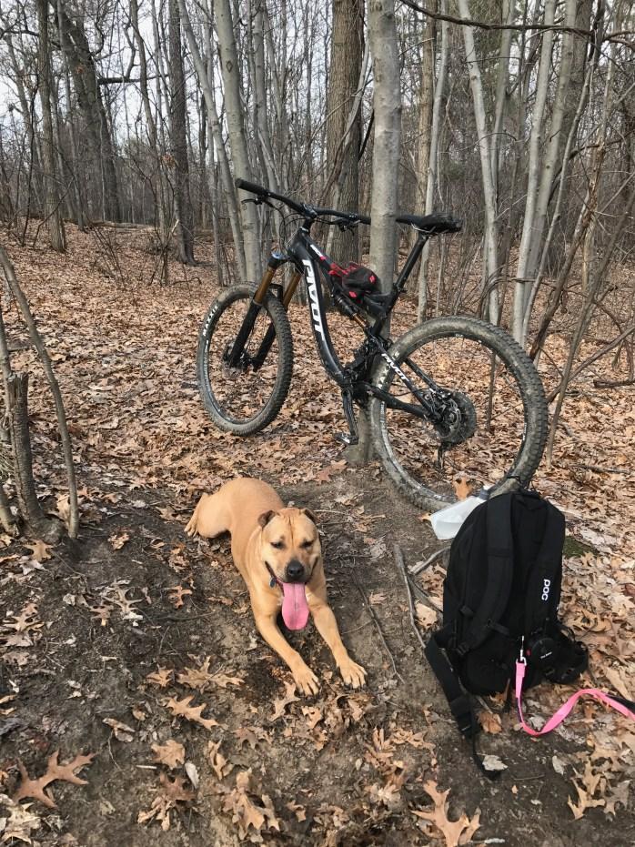 Mountain Bike Dog Training