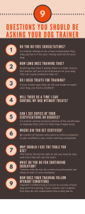 9 questions clients should ask dog trainers