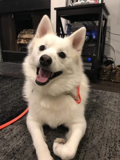 Dog training Danbury CT KOdi