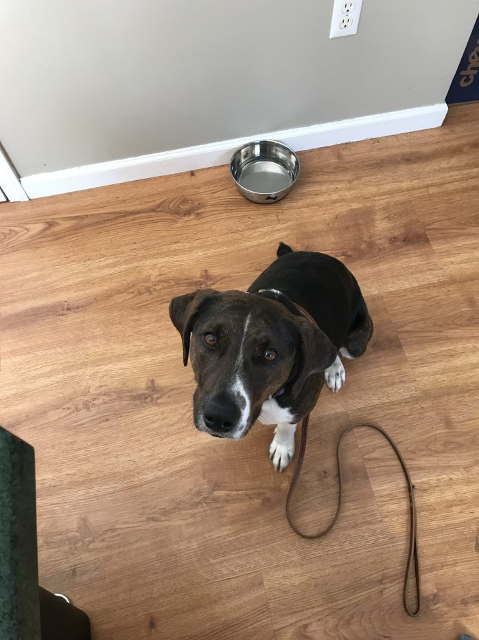 Dog trainer in Poughkeepsie NY