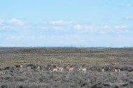 We enjoyed the antelope in both Idaho and Montana.