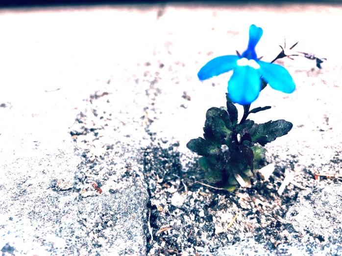 Resilienz & Gelassenheit