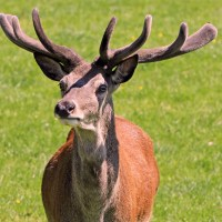 Random Thought of the Week: Deer Knuckle