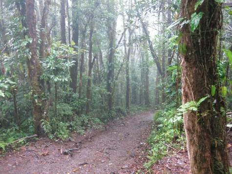 Die Wege im Regenwald