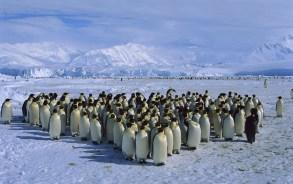 pingvinu_bars