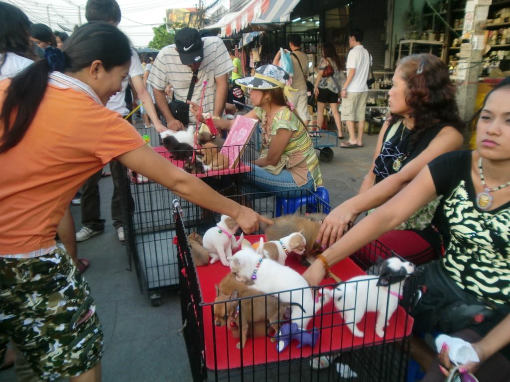 タイ風ペットショップ?!市場にいた可愛い子犬。