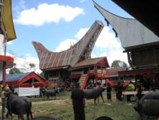 Buffalo slaughter is a ritual of the communities of Tana Toraja
