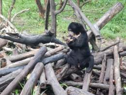 Balikpapan's Bear Sanctuary