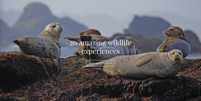 top 20 wildlife