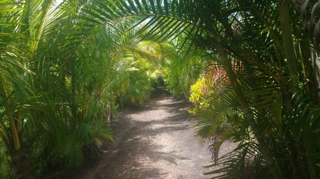 Pathway down to Linda Vista farm