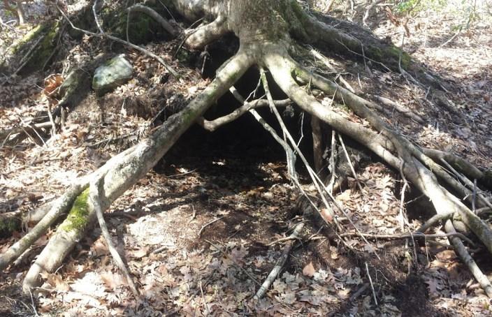 Root Den