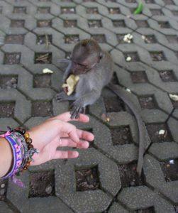 Girls Who Travel | Feeding a small grey monkey