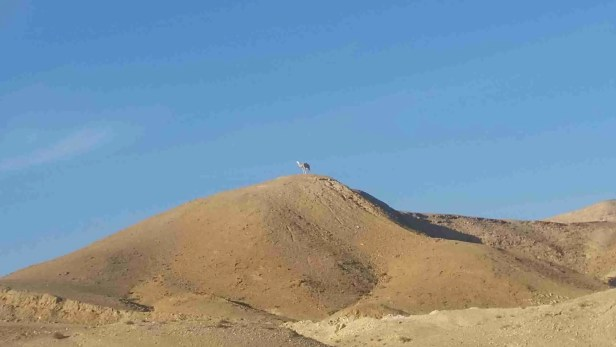 The Camel on the Hill