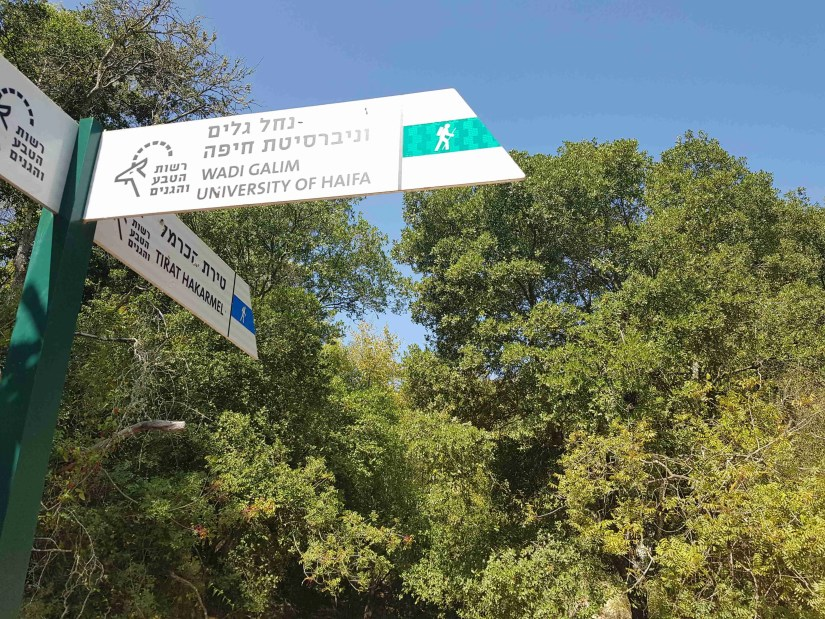 Continue on the blue-marked trail to Tirat HaCarmel