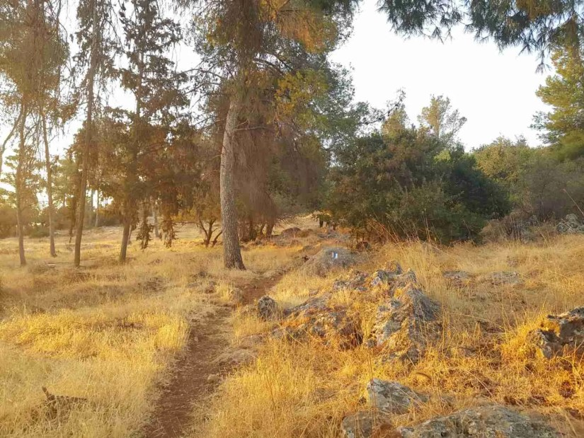 Nabi Yusha forest