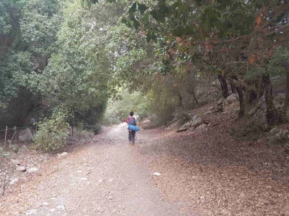 Hiking through the woods on the Israel National Trail