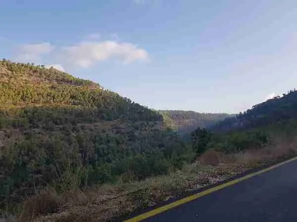The Southern Scenice Route in the Martyrs Forest on the Israel National Trail