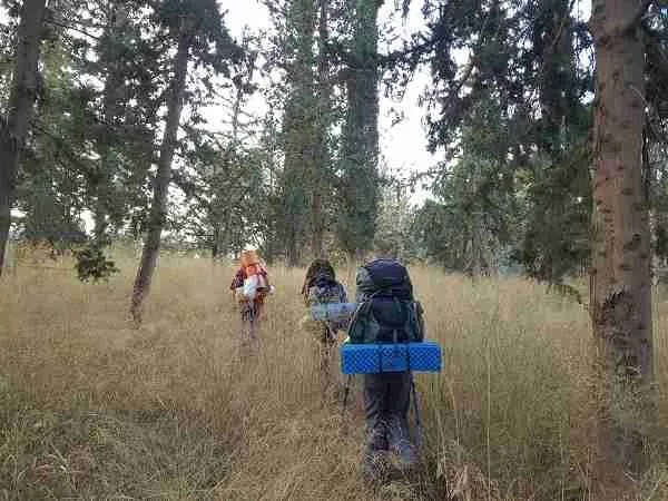 Walking through the woods of Latrun on the Israel National Trail