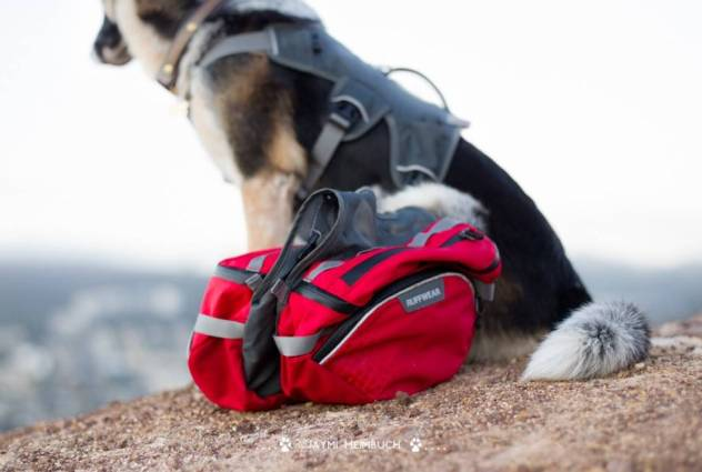 Best Dog Backpack For Hiking