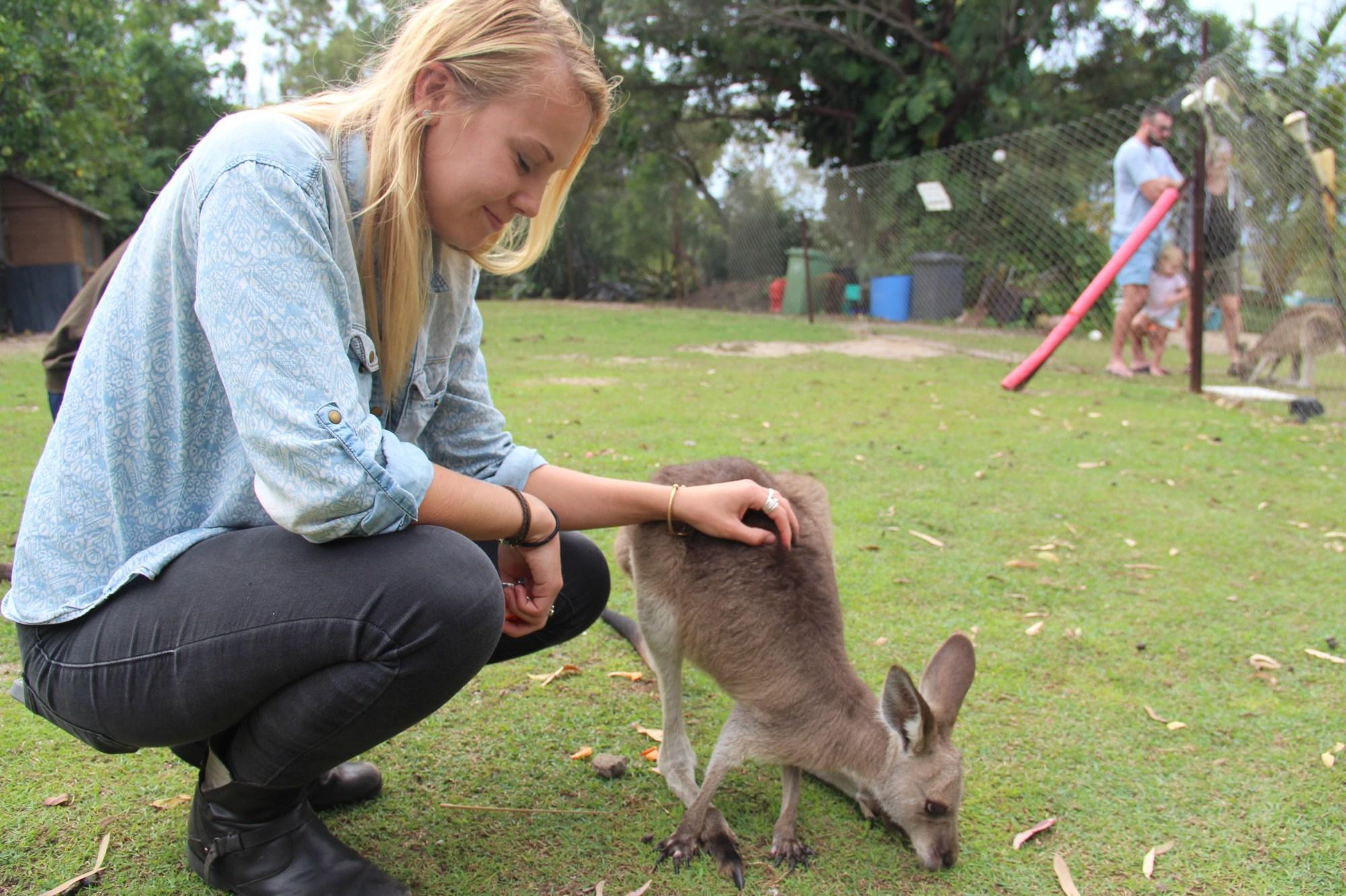 kangaroos in agnes water