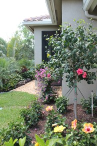 Hibiscus Shrubs And Tree Add Color Outside The Bedroom Window