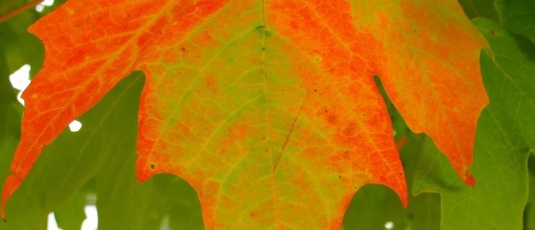 Retro Roadtrip: Appalachian Autumn Part 1