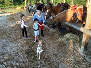 Santa and Kids Feeding Horses Indiana