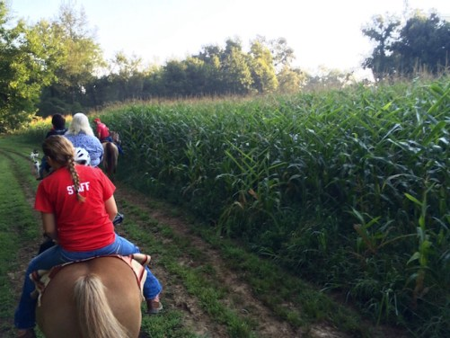 Riding Horses through Indiana Corn Field