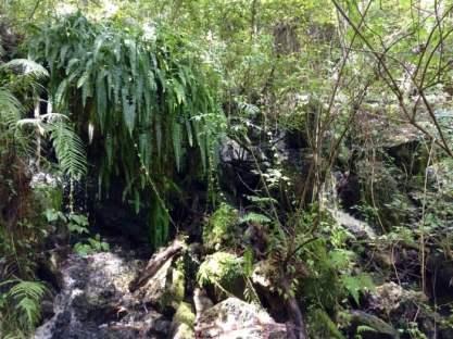 Devil's Millhopper Cascade Waterfall