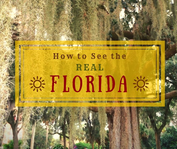 How to See the Real Florida: 11 Essential Web Sites