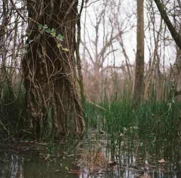 Rodney Mississippi Flood Tree