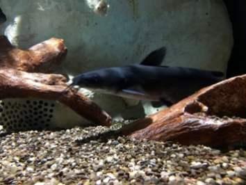 Lower Mississippi River Museum Aquarium