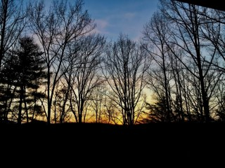 Silhouette Trees Sunset