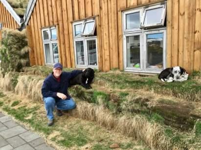 Howard Dogs Iceland