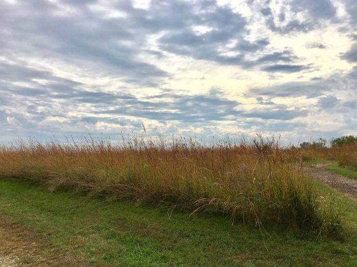 Kansas Museum of History prairie grass