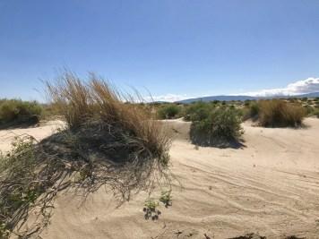 IMG 2288 - Wildflower Chasing at Anza-Borrego Desert State Park California