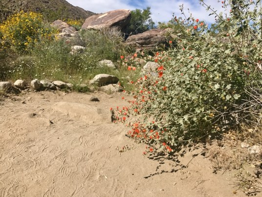 IMG 2693 - Take a Hike up Southern California's Tahquitz Canyon