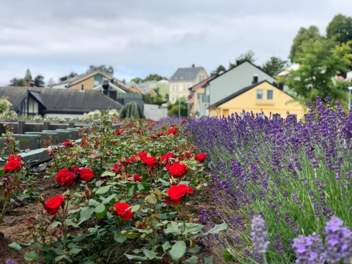 "IMG 2898 - Viking Cruises to Norway & the UK: An ""Into the Midnight Sun"" Travelogue"