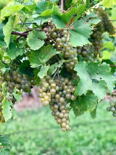 IMG 5514 - A Taste of New York's Finger Lakes Wine Country