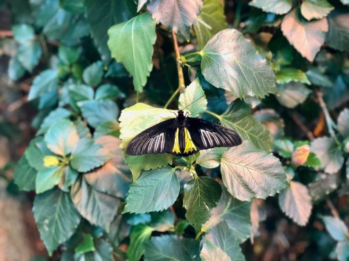 butterfly - Find Fun and Laughter in Upstate New York