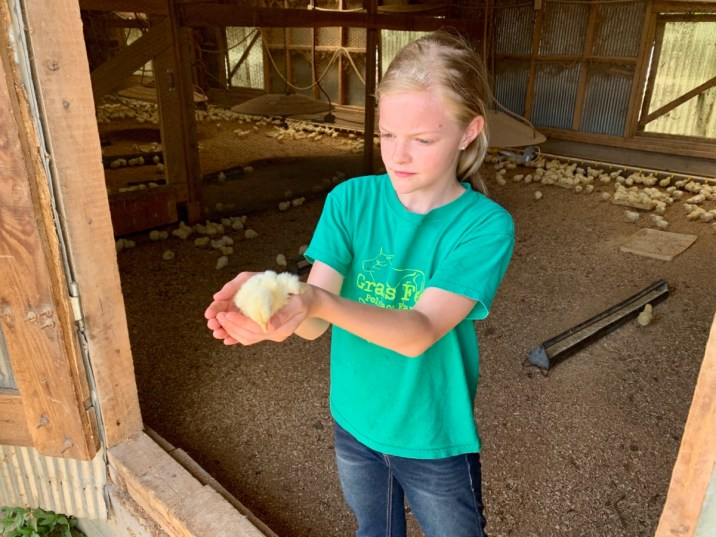 Polyface Farm Lauryn holding Chick