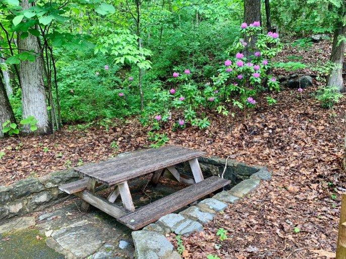 Natural Bridge State Park picnic table