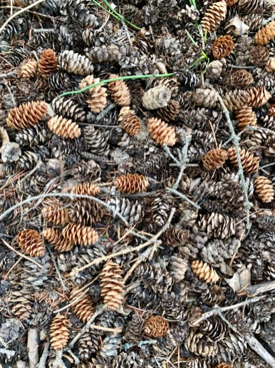 PInecones - The Best Sites & Activities for a Town of Banff Adventure