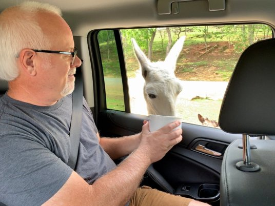 Virginia Safari Park Feeding Llama - Scenic & Historic Things to Do in Lexington, Virginia