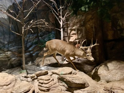 Fernbank Deer - 3 World-Class Atlanta Museums of History