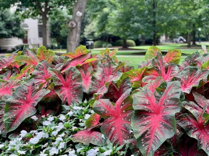 UGA North Campus Gardens - 18+ Outstanding Athens Georgia Attractions