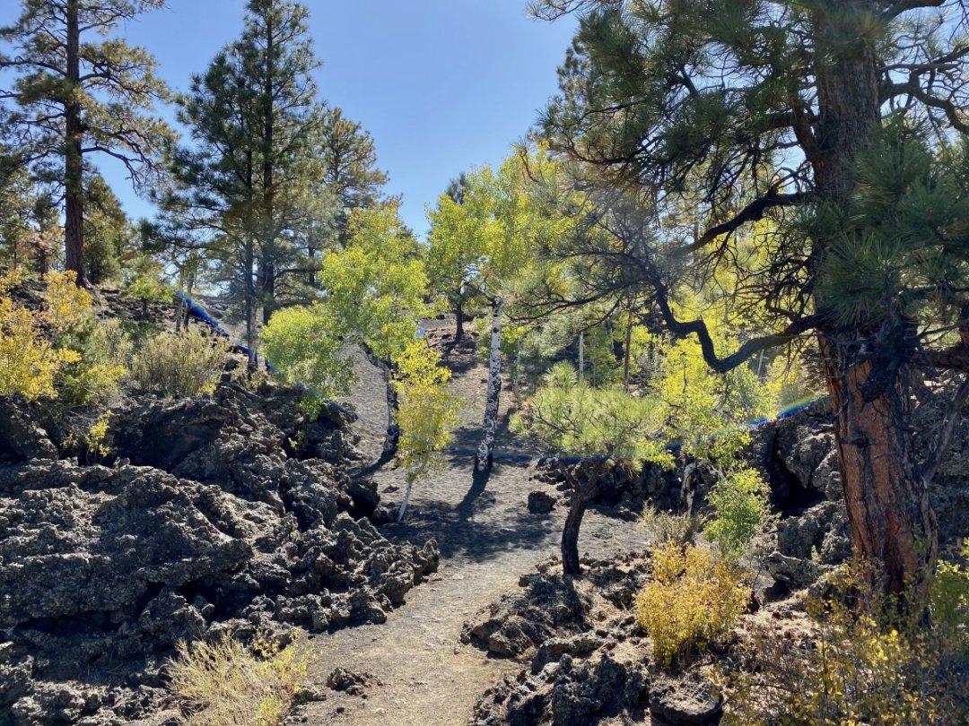 Bonito Lava Flow vegetation - 3 Magnificent Flagstaff National Monuments